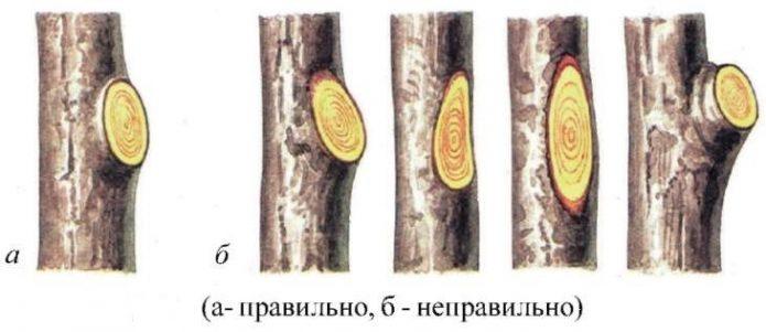 Схема выполнения обрезки «на кольцо»