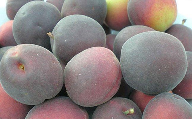 Плоды сорта абрикоса Мелитопольский чёрный