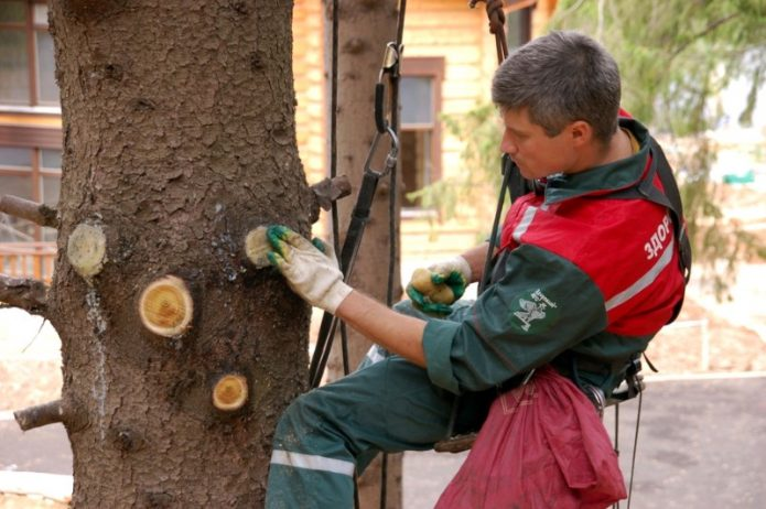Обработка среза дерева садовым варом