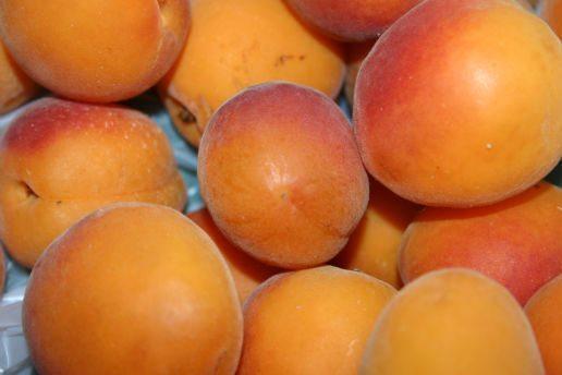 Плоды абрикоса Звёздный