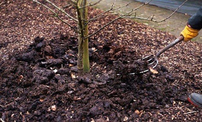 Внесение органических удобрений под абрикос весной