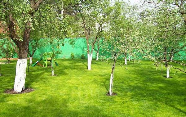 Вишни и яблони в саду