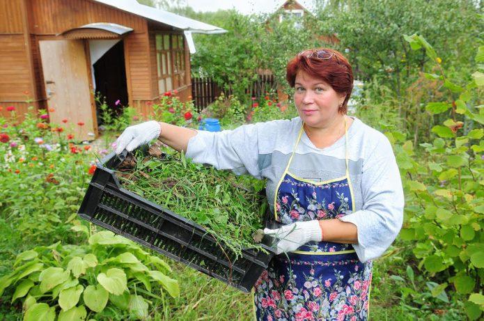 Сырьё для зелёного компоста