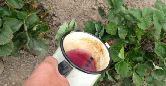 Раствор марганцовки