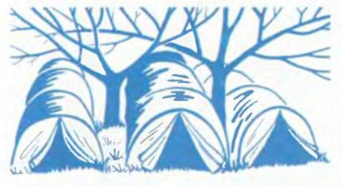 Тепличные сооружения между деревьями