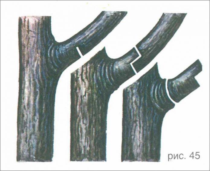 Схема обрезки ветки по частям