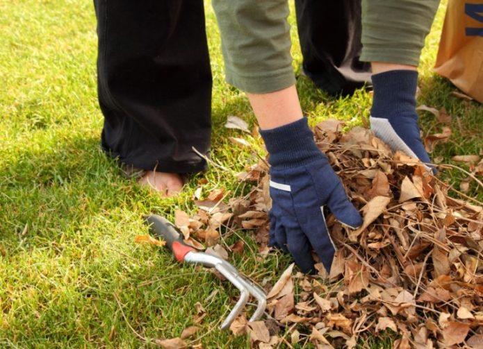 уборка прошлогодней листвы