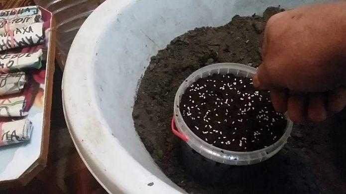 Посев семян малины