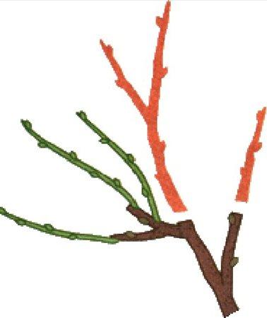 обрезка смородины на трехлетнюю древесину