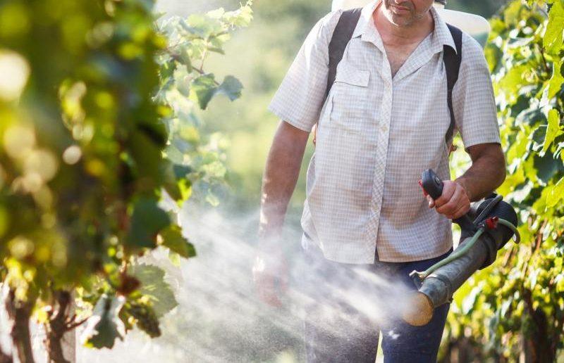 Опрыскивание винограда для защиты от болезней и вредителей
