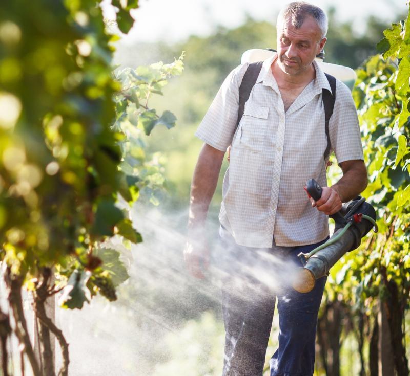 Чем опрыскивать виноград от болезней и вредителей весной до распускания почек