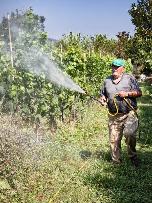 Дополнительное опрыскивание винограда