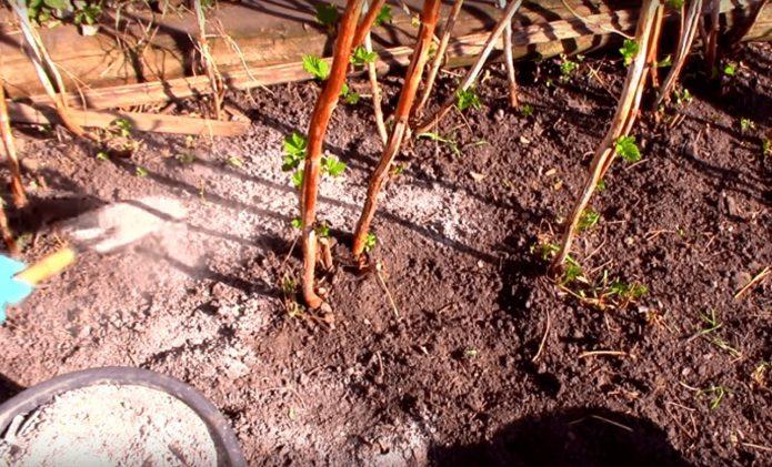 Удобрение малины весной