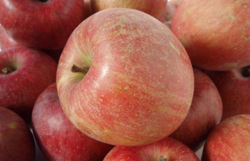 Яблоки сорта Фуджи