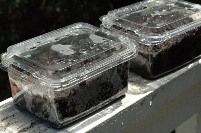 Мини-тепличка для проращивания семян