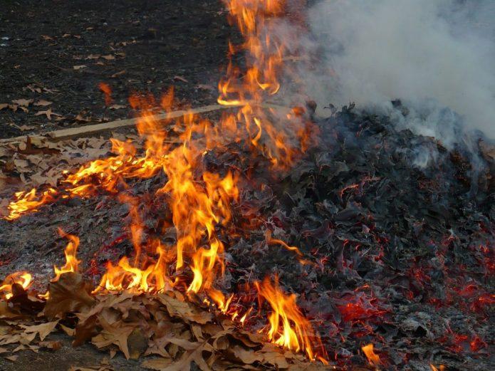 Сжигание органического мусора