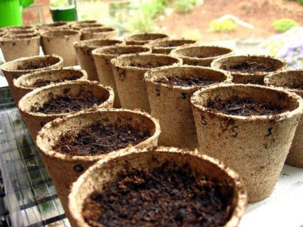 Торфяные стаканы с почвой