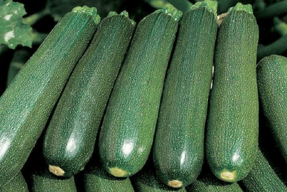 Плоды цукини