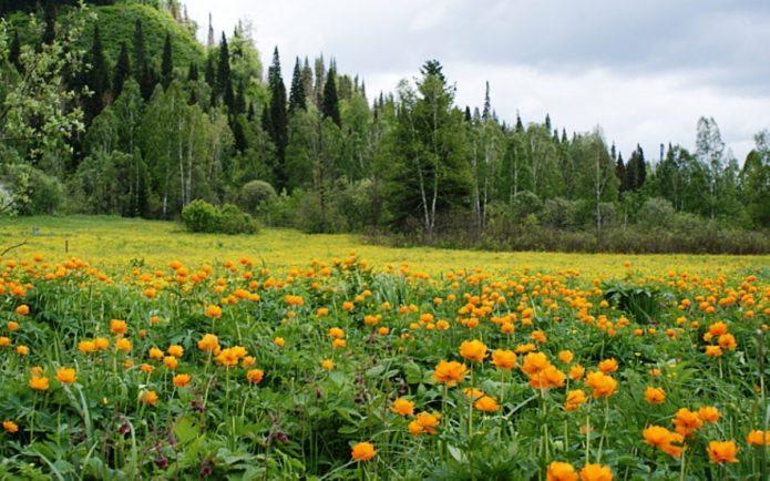 Сибирский пейзаж