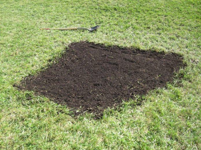 Подсев травы в проплешины на газоне