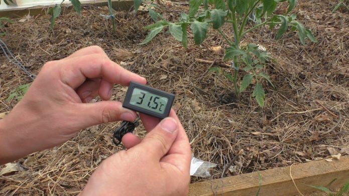 Термометр для теплицы