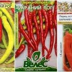 Семена горького перца Бараний рог