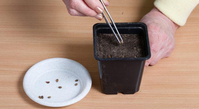 Ёмкость с семенами