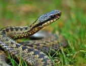 змея в траве