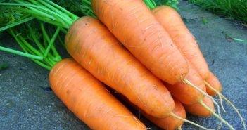 Морковь Chantenay