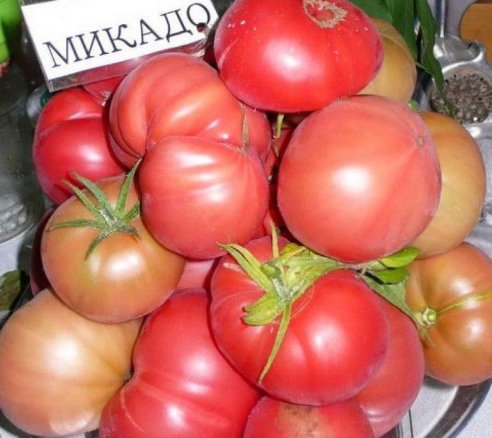 Сорт томата Микадо розовый