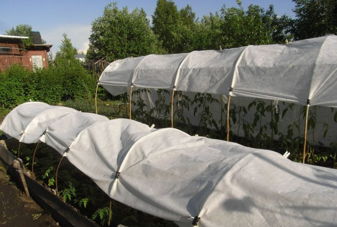 Укрытие из спанбонда для томатов
