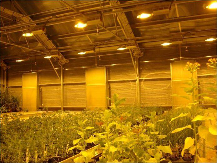 Досвечивание рассады натриевыми лампами высокого давления
