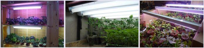 Досвечивание рассады люминесцентными лампами