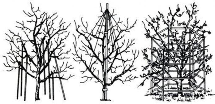 Схемы подпорок плодового дерева