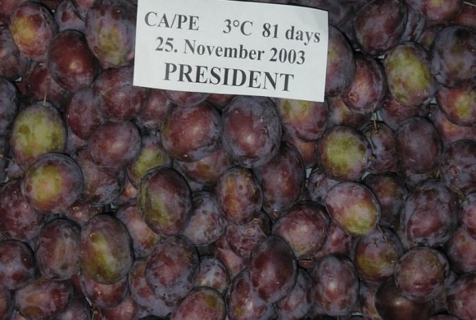 Плоды сливы Президент