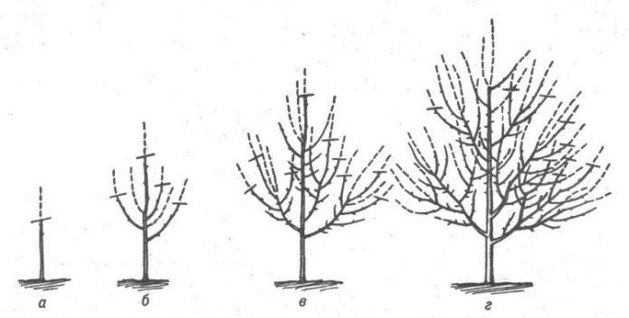 Схема формирования дерева