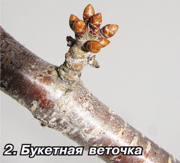 Букетная веточка вишни