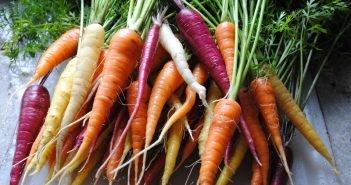 Разные сорта моркови