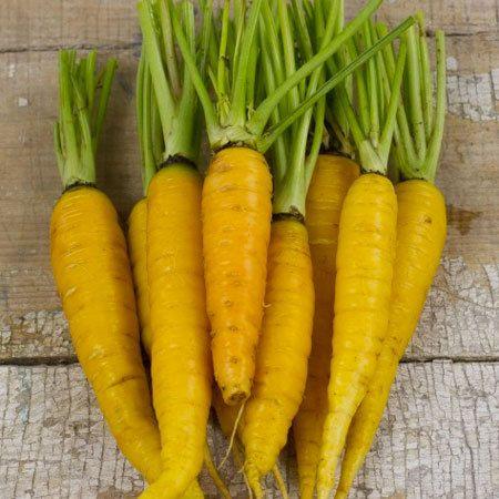 Морковь Солнечно-жёлтая
