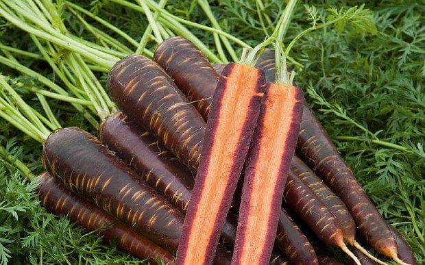 Морковь Фиолетовая дымка F1