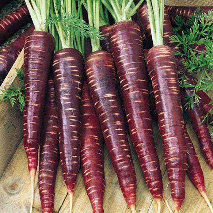 Морковь Фиолетовый дракон