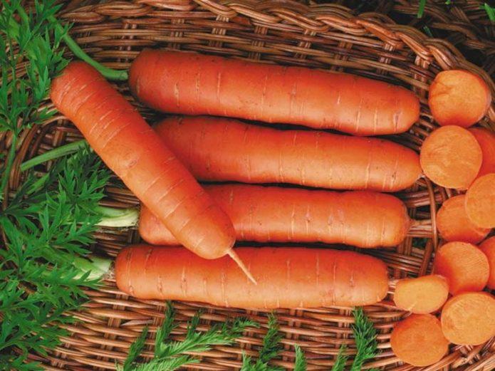 Морковь Чемпион