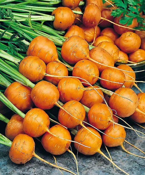 Морковь Рондо