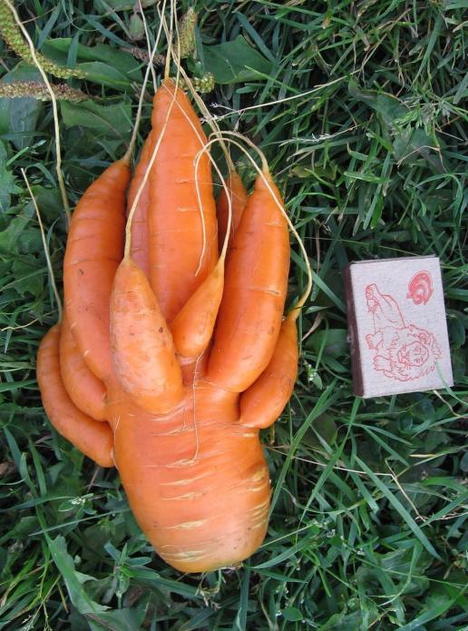 Морковка-осьминожек