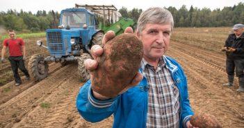 на уборке картофеля