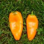 Перец Апельсин