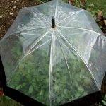 Парник из зонтика