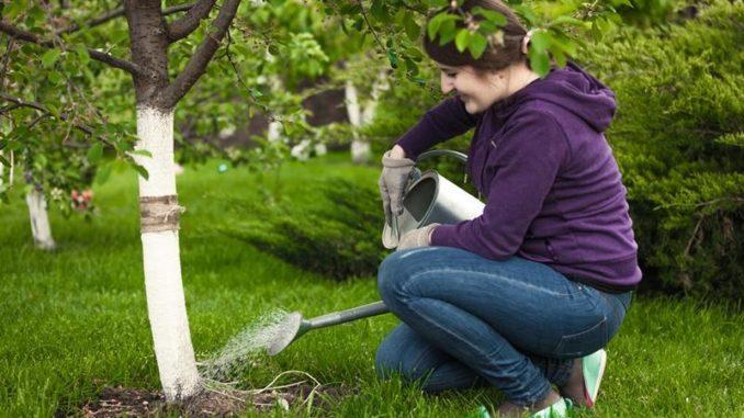 Влагонасыщение вишни
