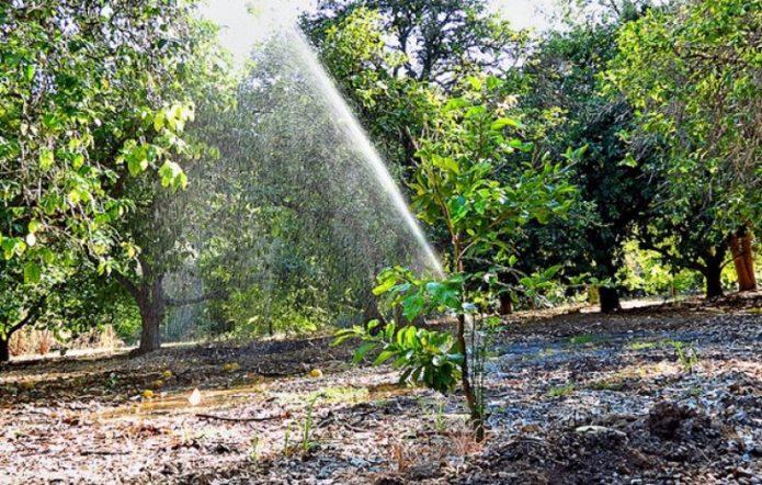 Дождевание деревьев