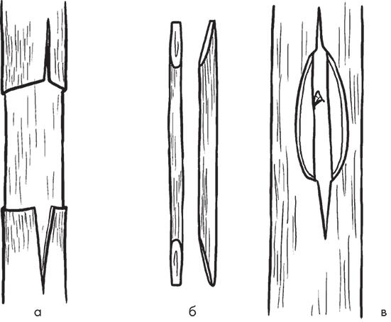 Схема прививки мостиком